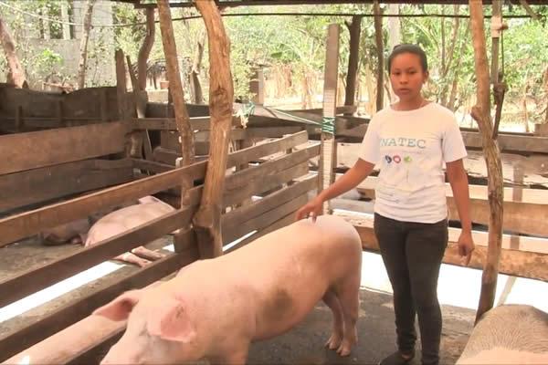 La joven Adhil poveda logra exitosa reproducción de cerdos y aves