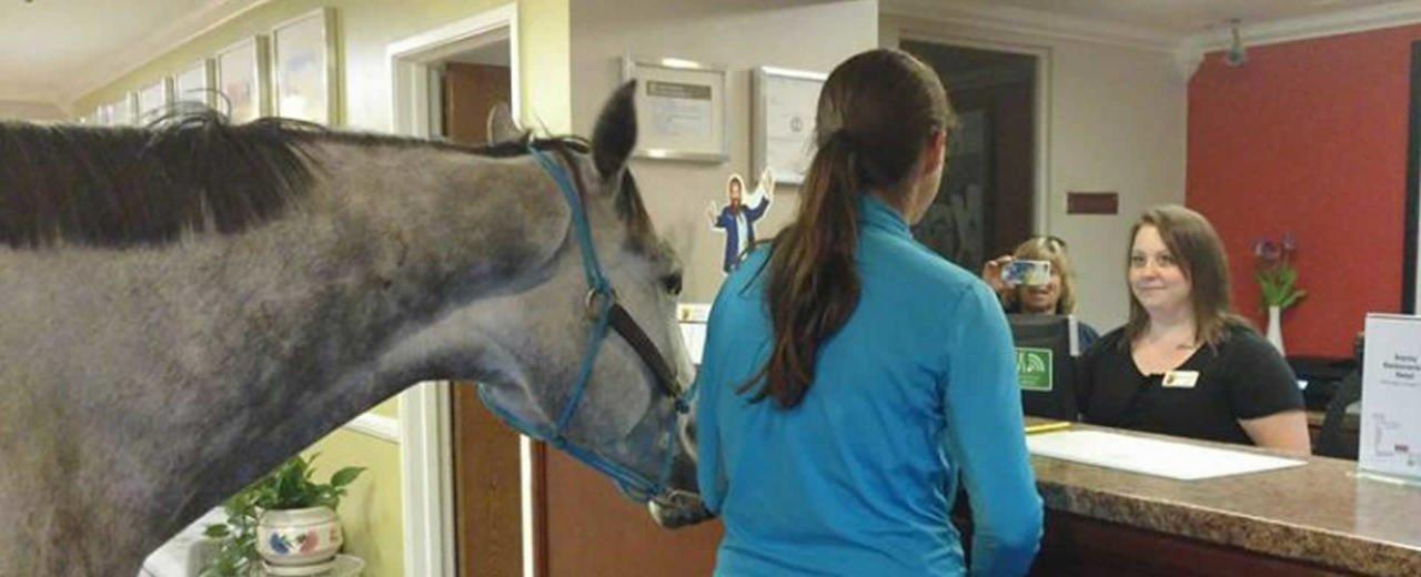 Entrenadora de caballos pide una habitación de hotel para ella y su mascota