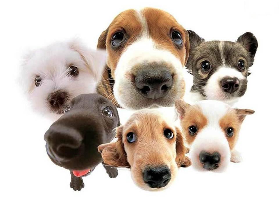 Una mascota puede darle sentido a tu vida