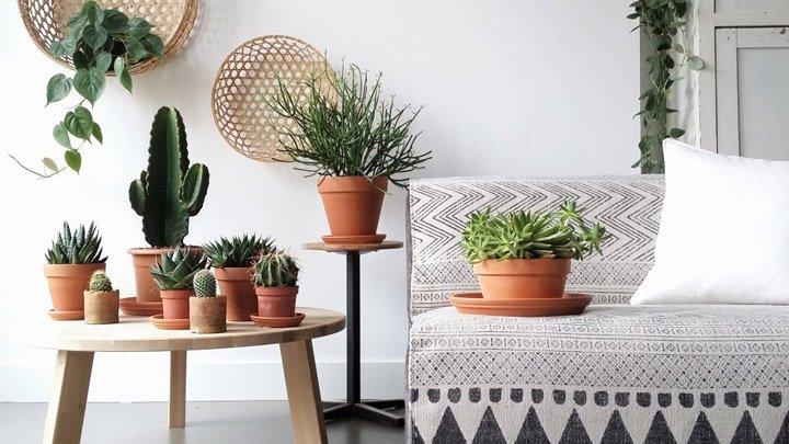 Por qu los cactus estn de moda en la decoracin de interiores
