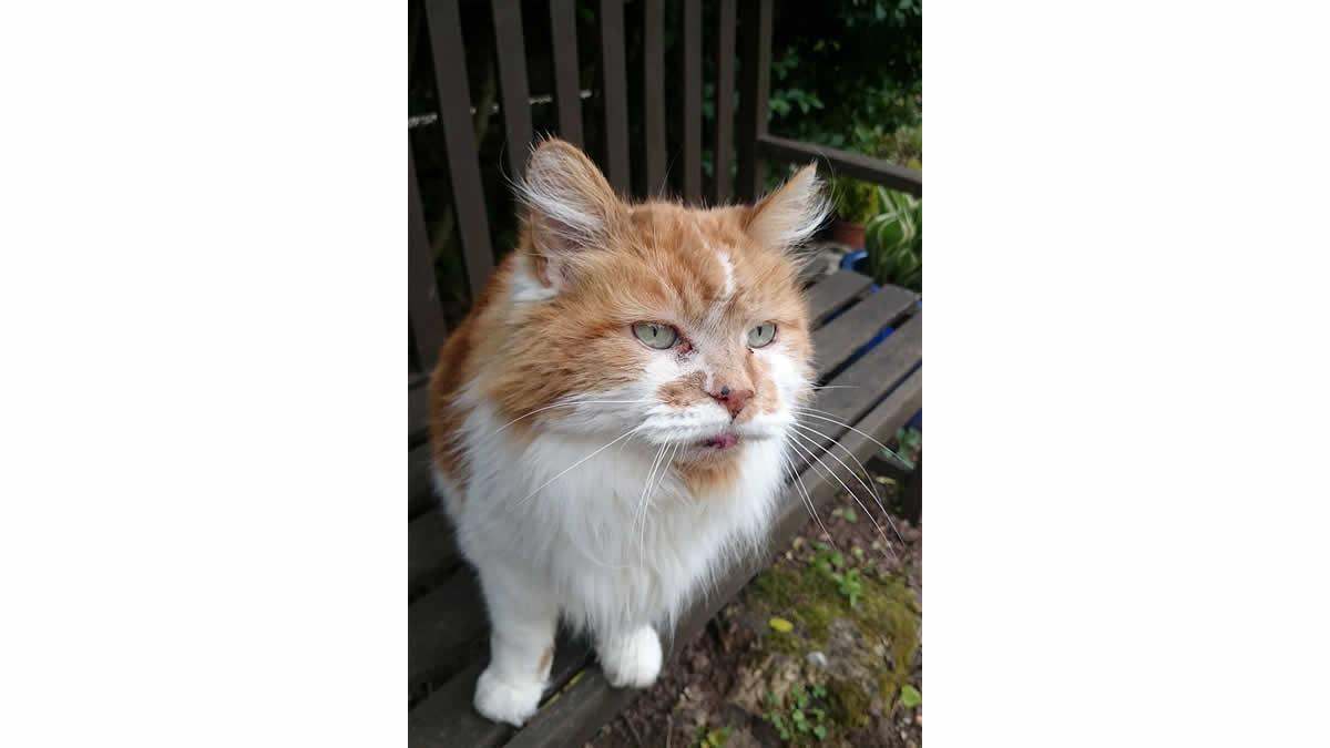Rubble, ahora es el gato más viejo del mundo con 30 años de edad