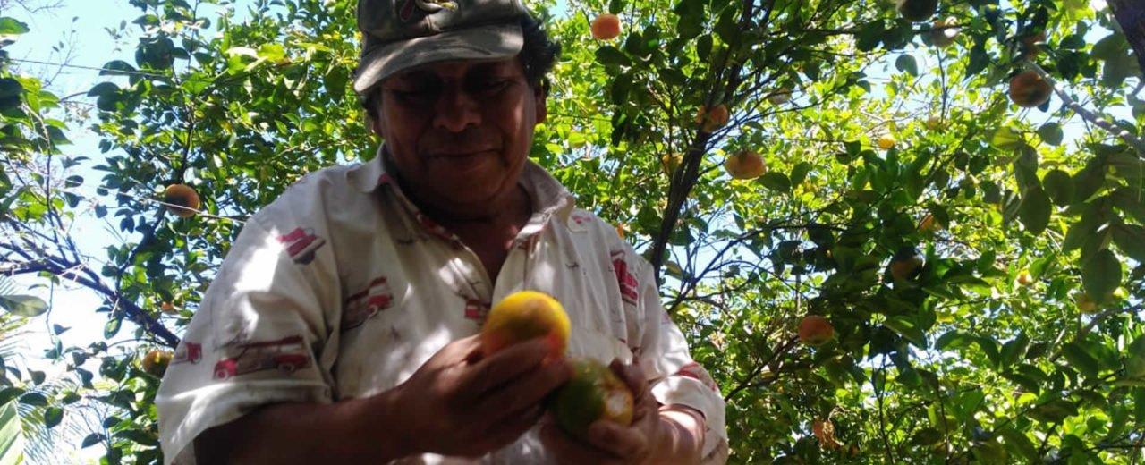 Francisco Miranda comercializa cítricos de calidad