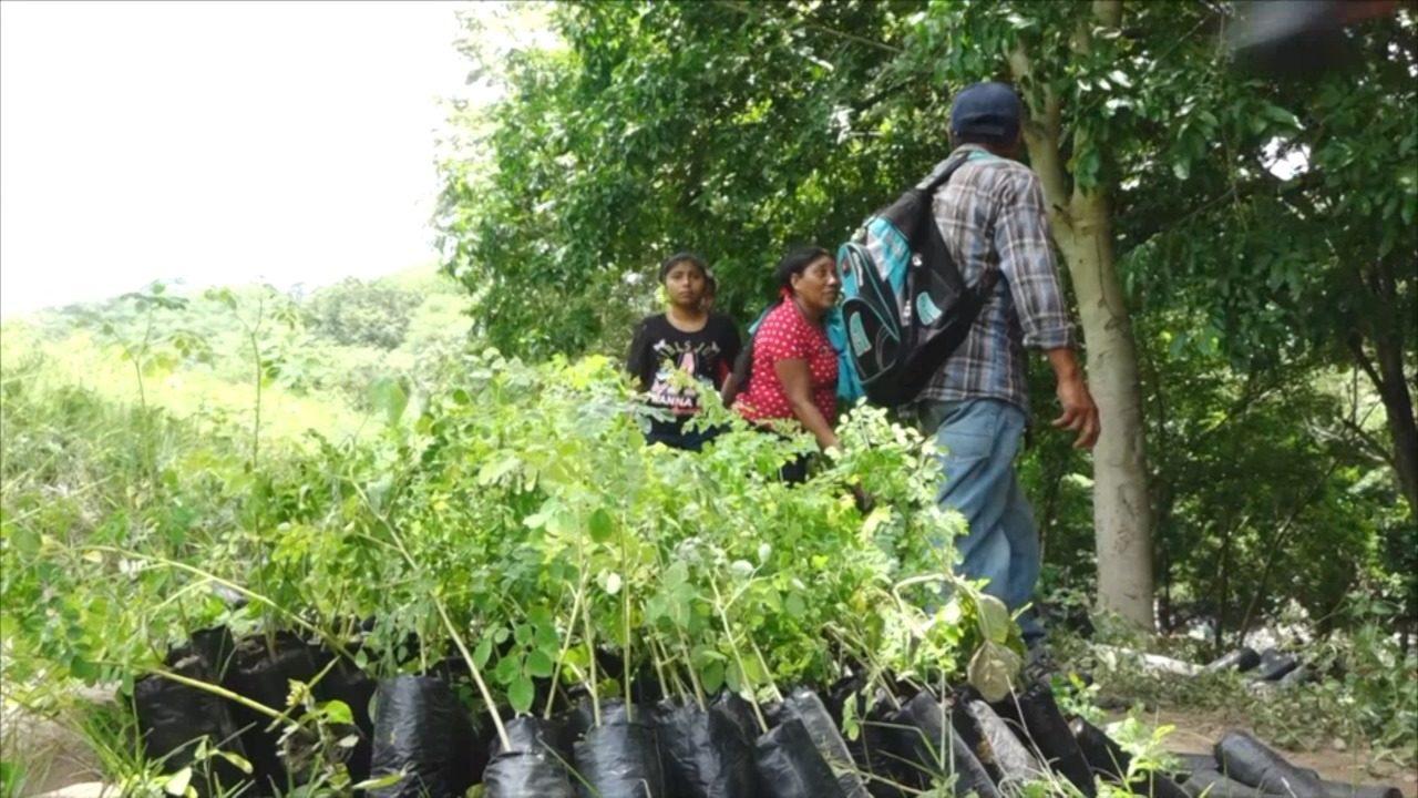 MADRIZ: Gobierno de Nicaragua inicia la jornada de reforestación departamental